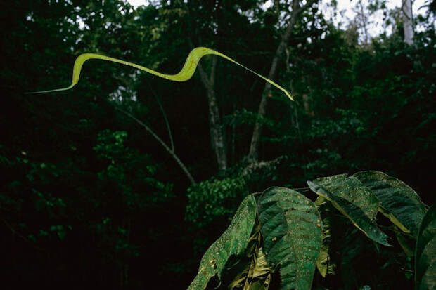 """11 самых странных и необычных змей """" . Самый интересный сайт…"""