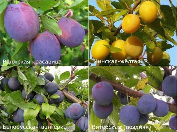 Фото: коллаж © Восадули.ру
