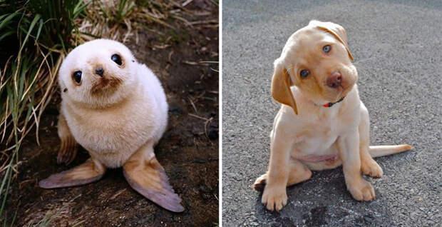 17.  животные, собака, сходство, тюлень