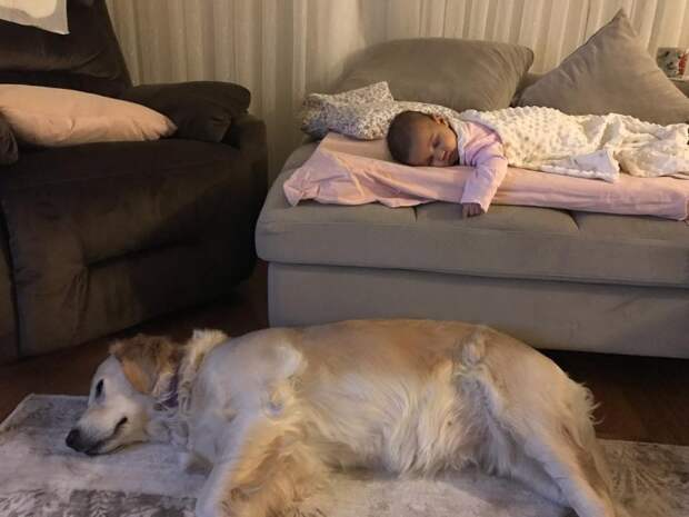 20 умилительных фотографий, после которых вы поверите в дружбу между детьми и животными