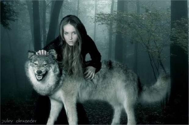Девочка, война и волк