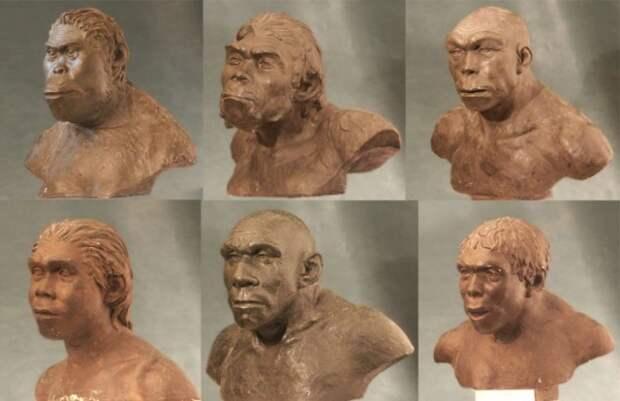 10 мифов об эволюции человека