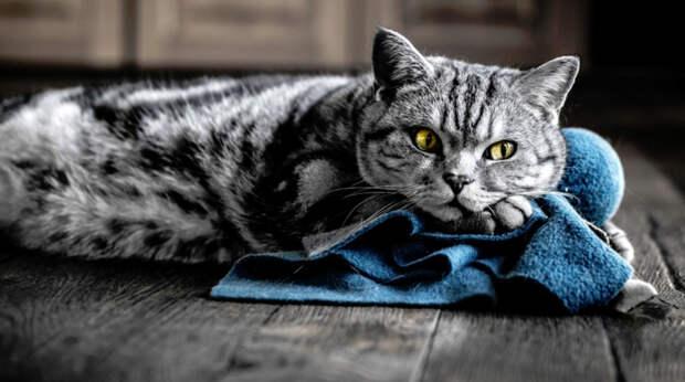 Котов надо лечить или усыплять?