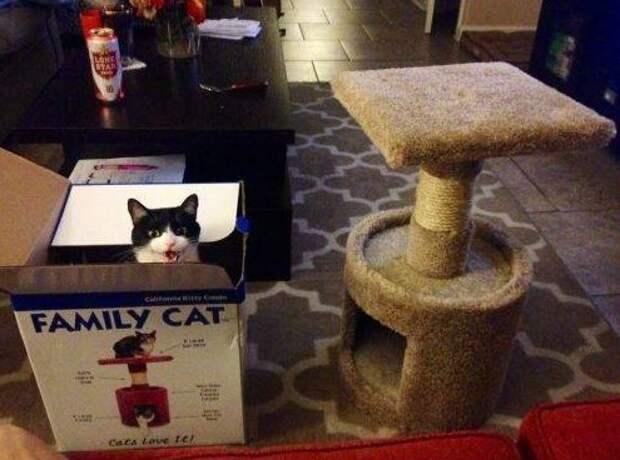 17 фото, которые поймут только владельцы котов