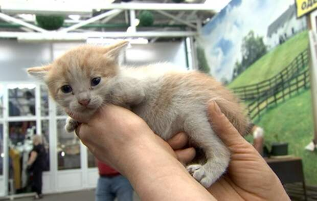 Котенок попал в западню на московском рынке. Его спасли неравнодушные жители