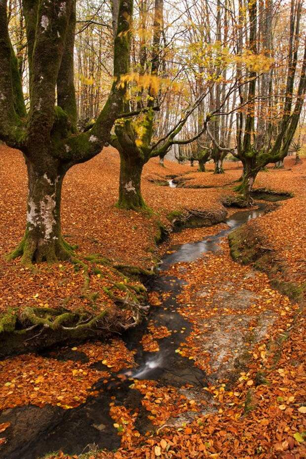 Мистический испанский лес