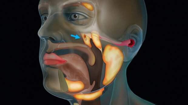 Анализ слюны позволит выявить онкологические заболевания без хирургического вмешательства