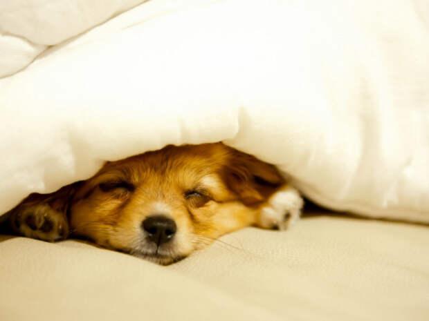 Здоровый сон под тяжелым одеялом: исследование ученых