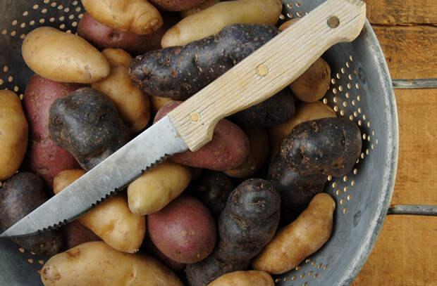 Картофельный салат: сытное блюдо когда горячая еда надоела