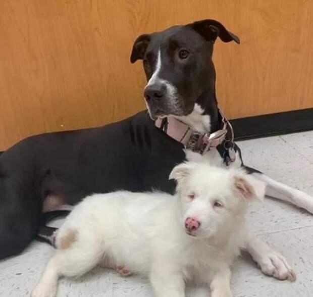 Глухой и слепой от рождения щенок боялся прикосновений
