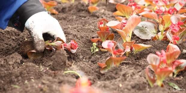 В  парке «Торфянка» привели в порядок цветники – «Жилищник»