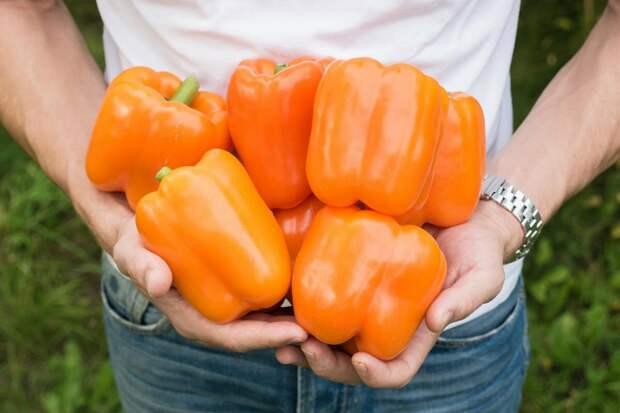 5 урожайных сортов сладкого перца, которые не требуют особого ухода