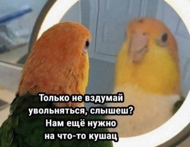 Шутки и мемы из Сети  — 27.10.2021