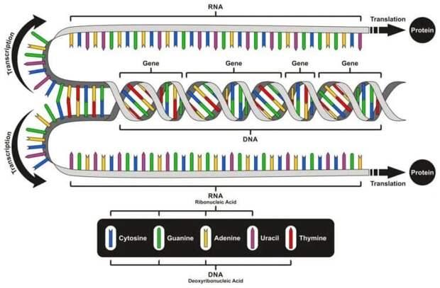 Почему ДНК и РНК не единственные генетические молекулы?