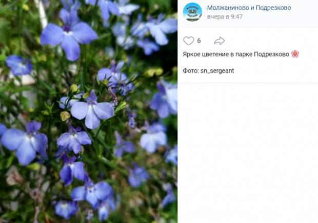 Фото дня: яркое цветение в парке «Подрезково»
