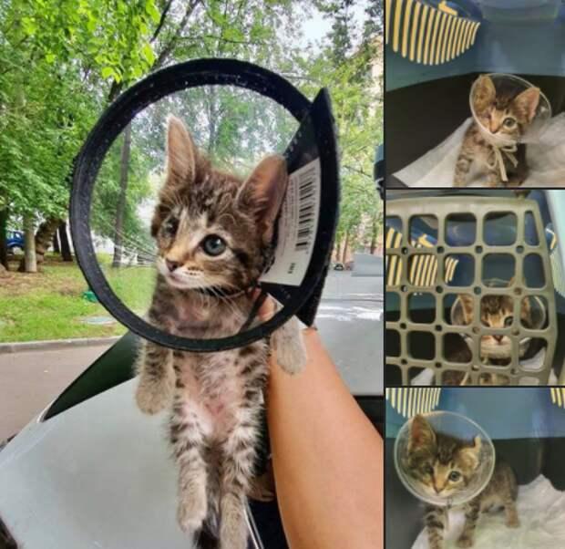 В районе Аэропорт ищут дом для чудом выжившего одноглазого котенка