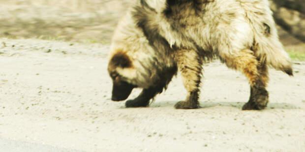 Ребенок стал жертвой бродячих собак в Башкирии