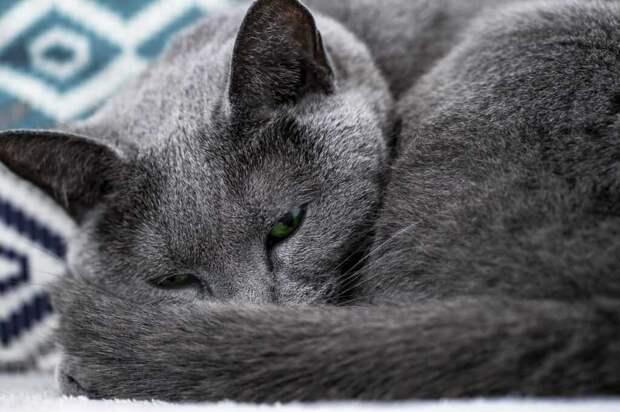 """Действительно ли кошки могут """"предсказывать"""" погоду?"""