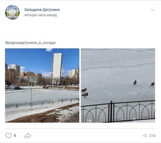 Фото дня: утки прилетели на «Ангарские пруды»