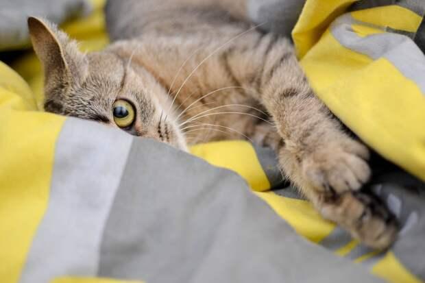 Австралийскому коту удалось выжить после 12-минутной стирки в машинке