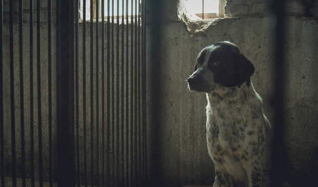 ВОмской области после нападения собаки начнут отлов