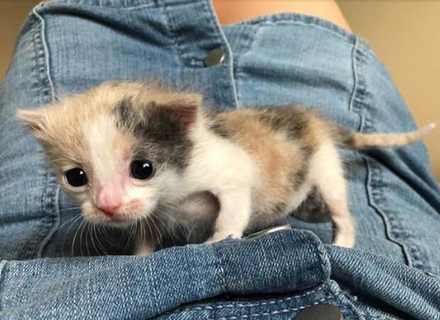 Почему котенок такой грустный? Его бросила мама, но позже он обрел новый дом!