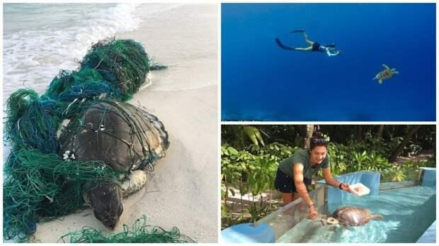 Ветеринар из Лондона приехала на Мальдивы спасать черепах Мальдивы, ветеринар, реабилитация, сети, спасение животных, спасение черепахи, черепаха, черепахи