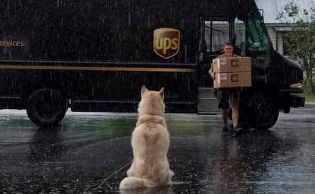 Лучший друг по переписке: как собаки встречают американских почтальонов