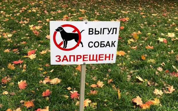 В сквере на Туристской запретили выгул собак
