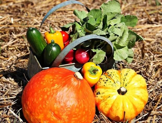 Что нужно сделать на огороде в сентябре, чтобы повысить плодородие почвы в несколько раз