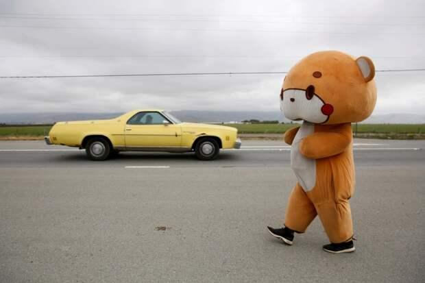 Шагающий медведь: парень прошел 770 км из Лос-Анджелеса в Сан-Франциско