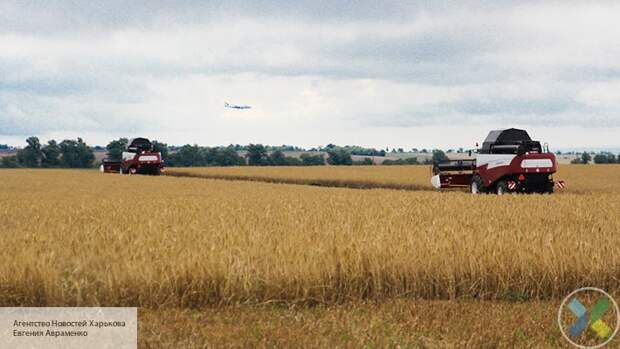 Экспорт зерновых из Украины упал на 16 процентов