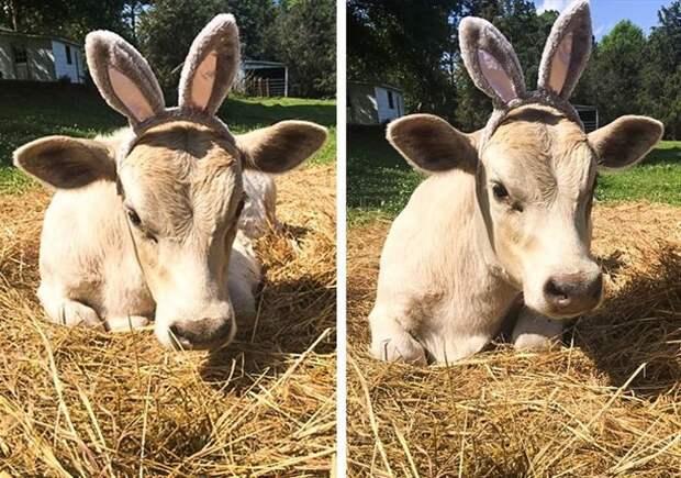Забавные моменты из жизни животных. Сплошной позитив!