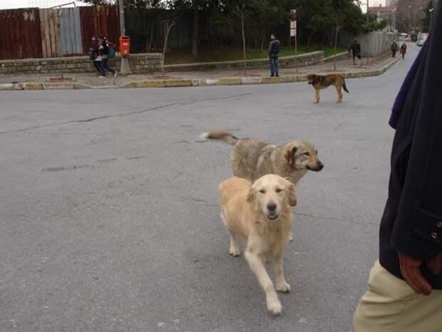 В Турции рай даже для бездомных собак. Их лечат, кормят и вакцинируют