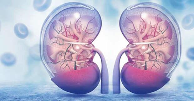 Пиелонефрит: симптомы, причины, факторы риска и натуральное средство для лечения (видео)