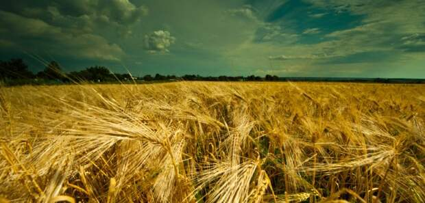 Россия снова обставила США и ЕС в «битве за урожай»