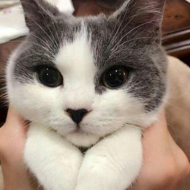 Посмотрите на его прелестный нос! животные, коты, кошки, подборка, смешное, собаки, фото, юмор