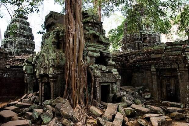 Гигантские деревья в камбоджийском храме Та Пром