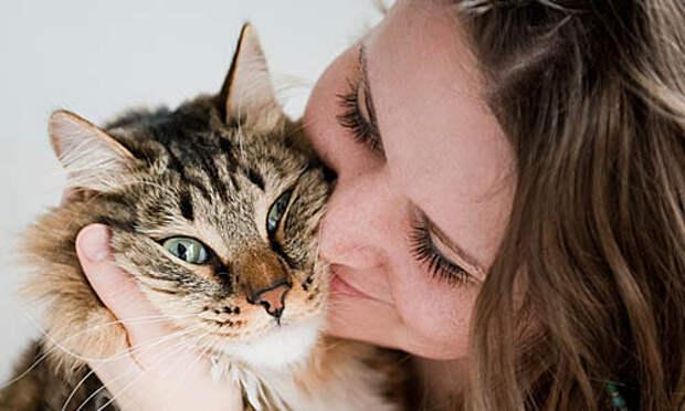 Закрепляют извинения перед кошкой тактильным контактом
