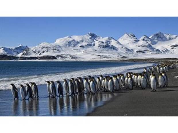 Кому достанется страна пингвинов