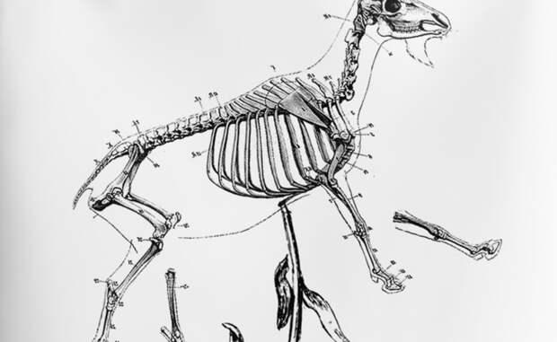 Мифические животные, в которых люди верили веками