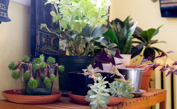 Создаем цветущий сад в обычной квартире