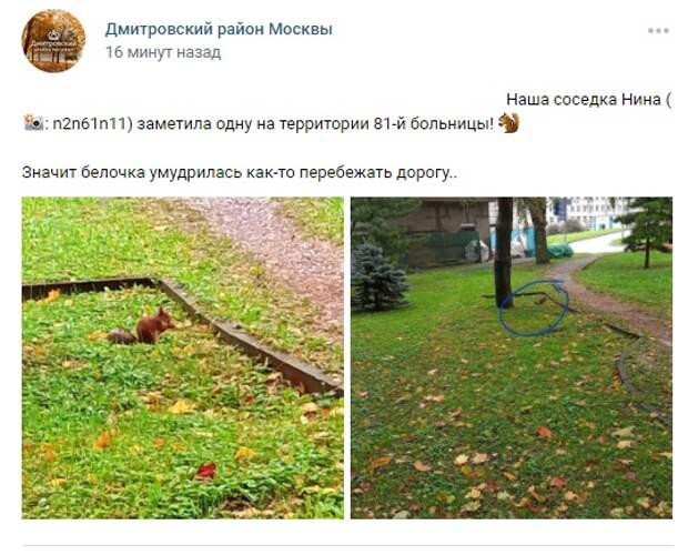 Фото дня: в Дмитровском районе расселились белки