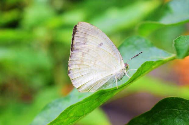 Повторно следует накрыть грядку лутрасилом, как только замелькала бабочка-белянка