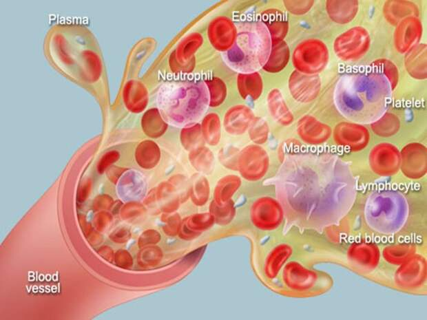 Памятка по общему анализу крови