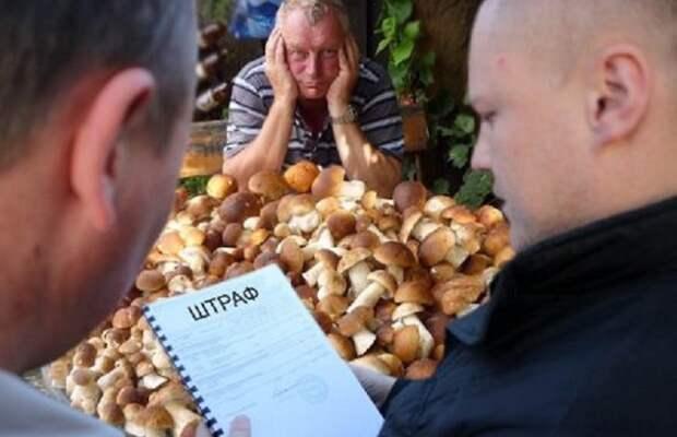 Лицензия на сбор грибов и ягод: первые штрафы