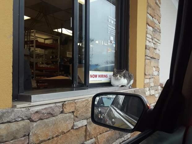 14. «У нас обед, вы что, не видите?» Любовь, животные, коты, кошки, люди, милота, питомцы