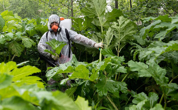 Минэкологии Подмосковья составило список опасных в благоустройстве растений