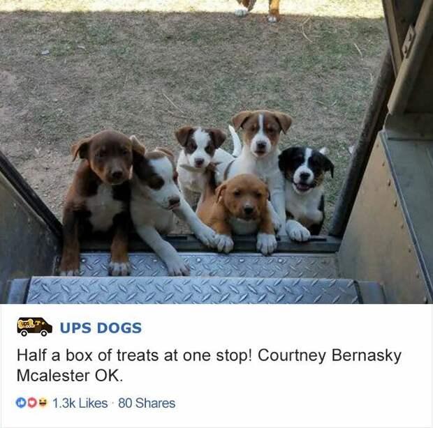 Одна остановка на маршруте — и половины упаковки лакомств для собак как не бывало. интересное, почтальоны, фотографии