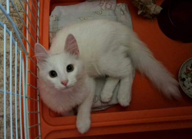 Девушка заметила неподвижный кото-комочек с белой шерсткой белый кот, кот, кошка, перелом